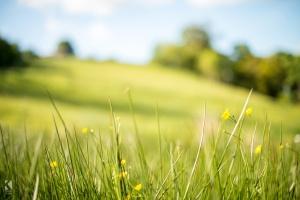 spring-field-haworth