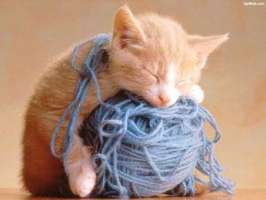 cat-string