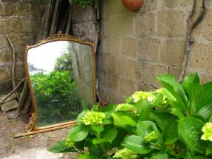 Di New Dawn, forum.giardinaggio.it