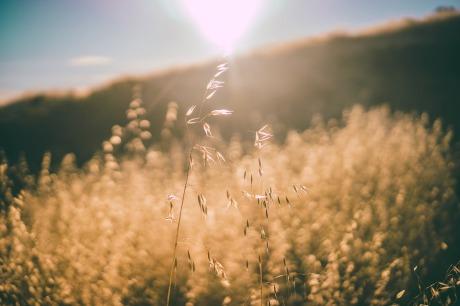 sun-rays-926501_960_720